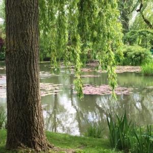 treesgiverny