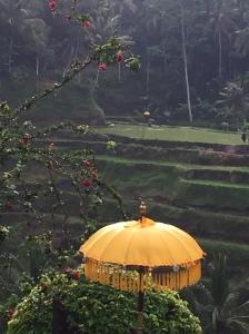 riceterraceswithumbrellabali