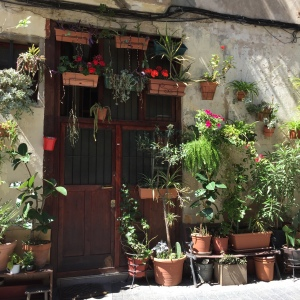 houseplantsbarcelona