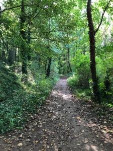 forestwalkanguerny