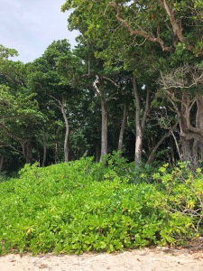 HavelockIslandgreenery