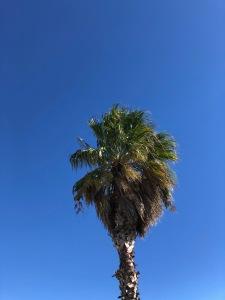 palmtreegruissan