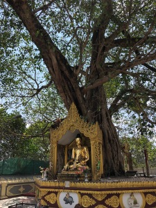 shwedagontree