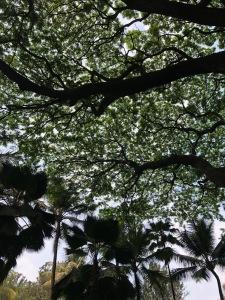 treesbangalore